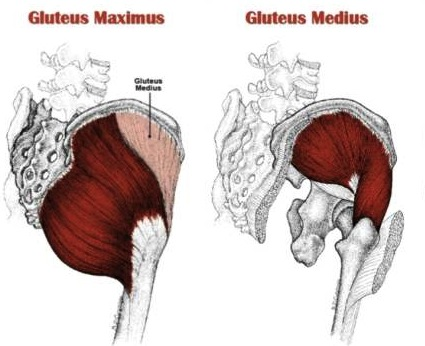 Best Hip And Glute Strengthening Exercises To Prevent Injuries