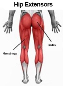picture of hip extensor muscles