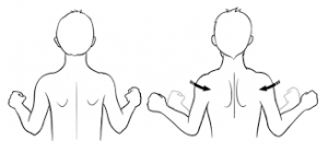 should blade squeezes for posture
